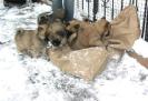 7_woche1_024-a_small_20121003_1362364137