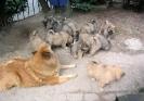 Tierarzt (2)
