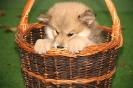 Quibby von der Wolfsangel